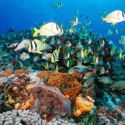 photo of underwater reef in Cozumel with tropical reef fish