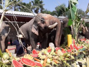 Thai Elephant Day: A Feast for Nobility