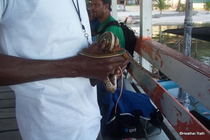 the Snakeman
