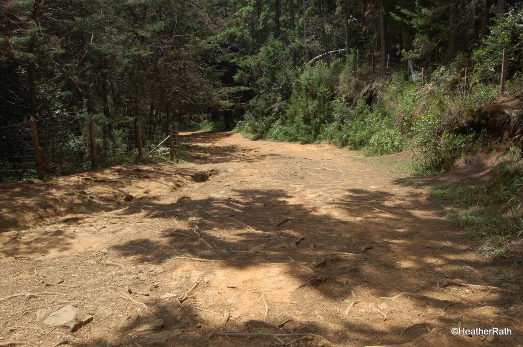 Ancient Inca road