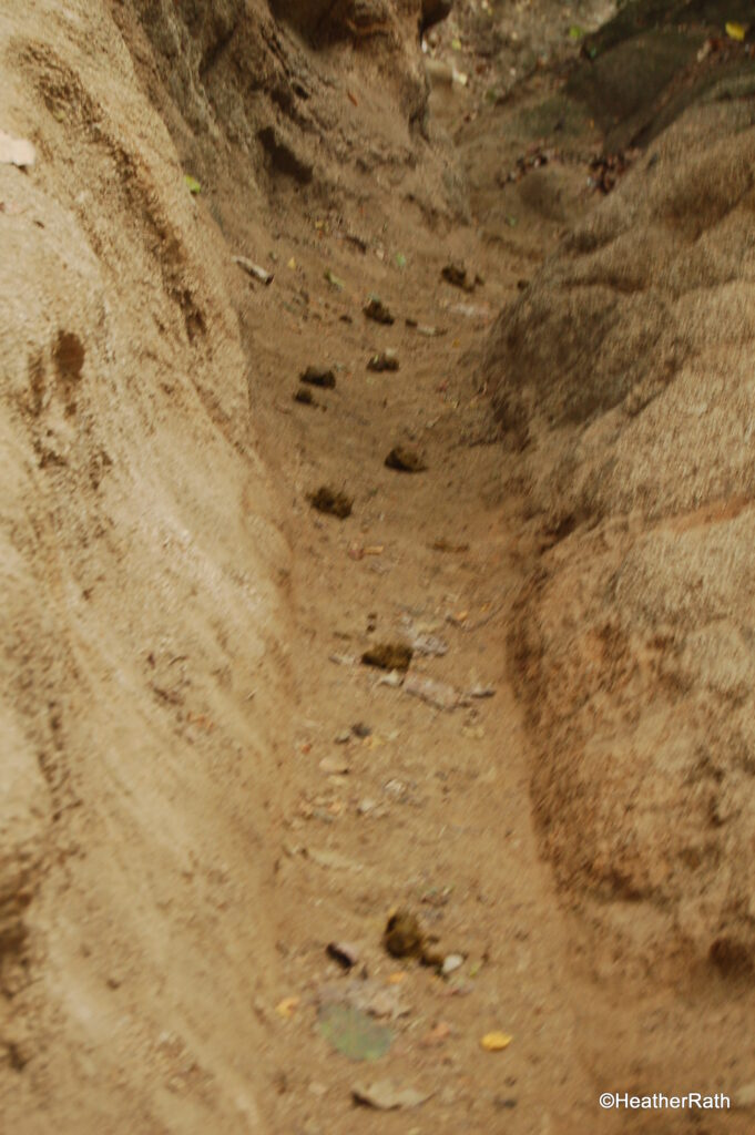 Donkey trail with droppings