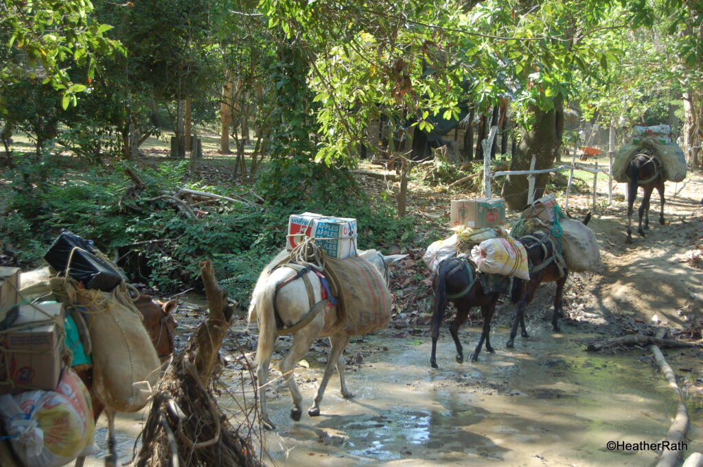 Park supplies carried by donkeys and pack horses