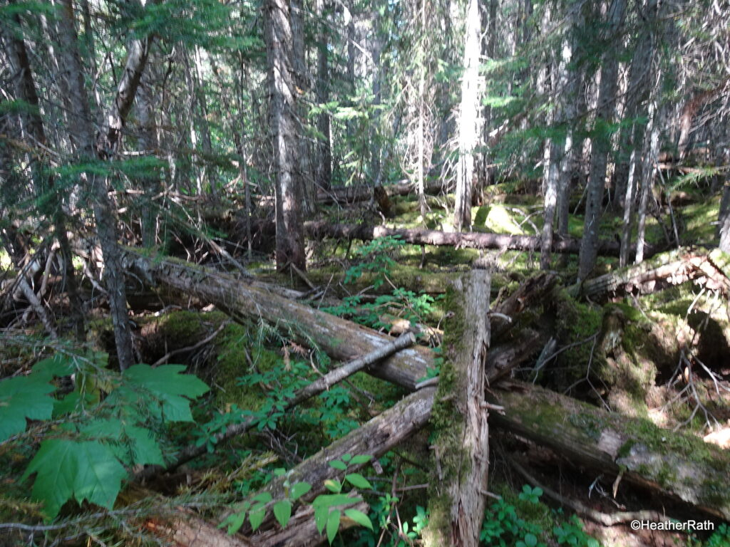 Forest terrain along the trail