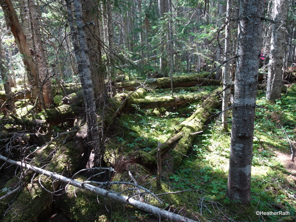 Are there any bears lurking? Make noise on the trail.