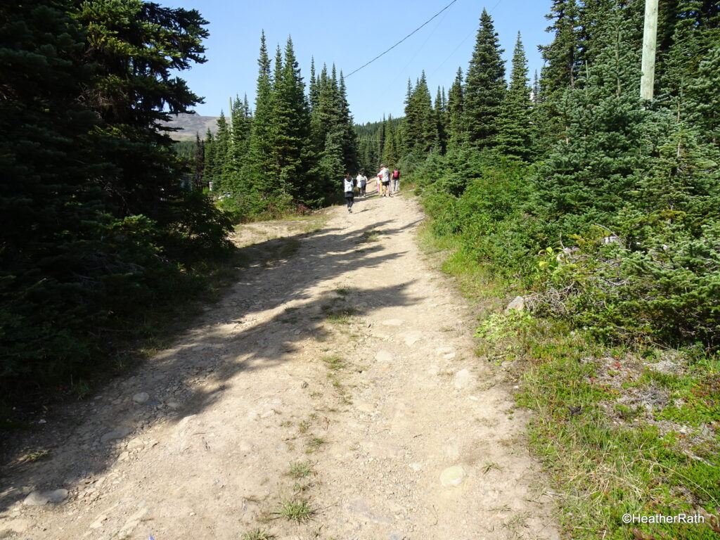 The beginning of the trail to Crater Lake