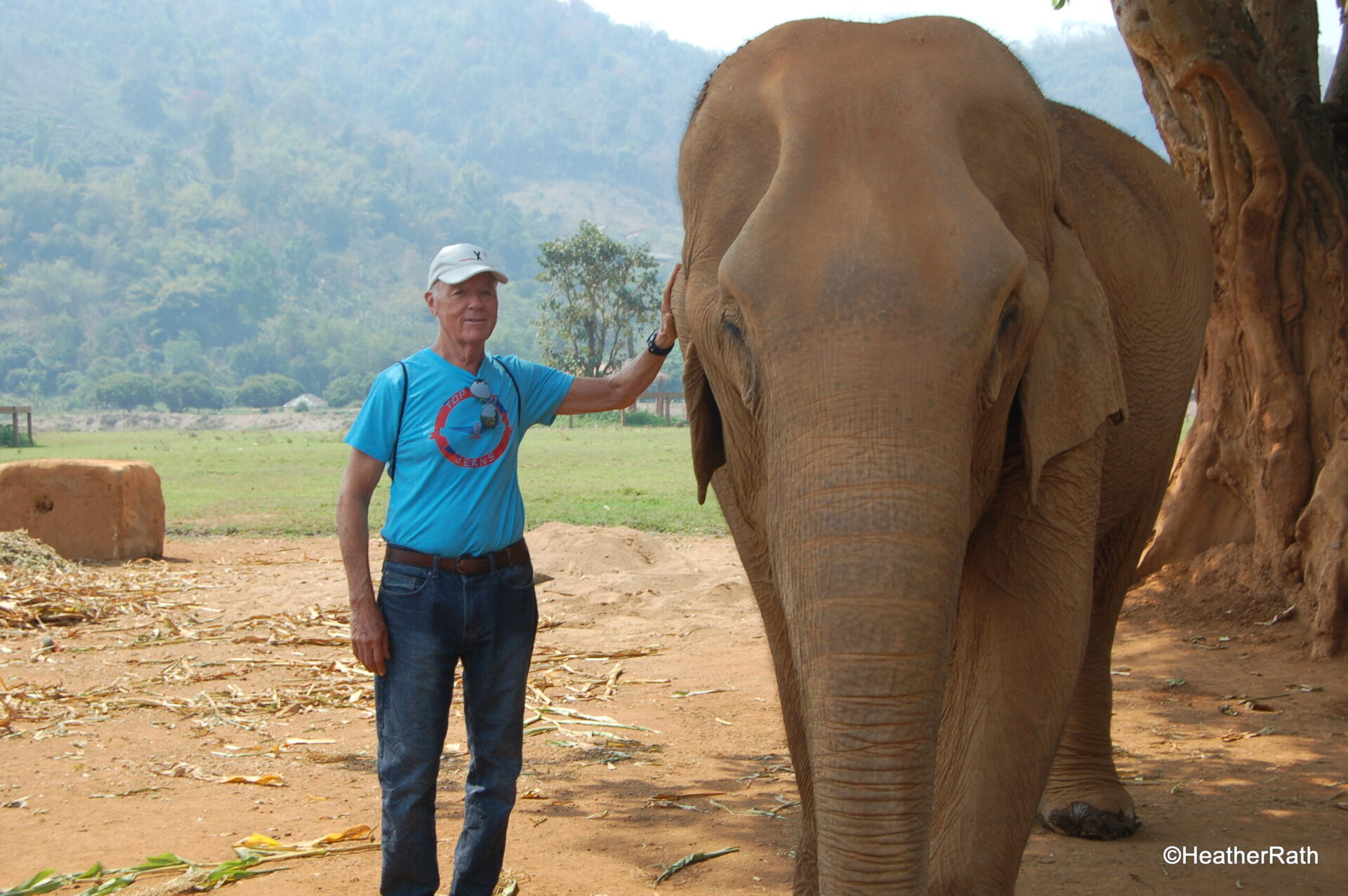 Read more about the article Why We Don't Ride Elephants in Thailand