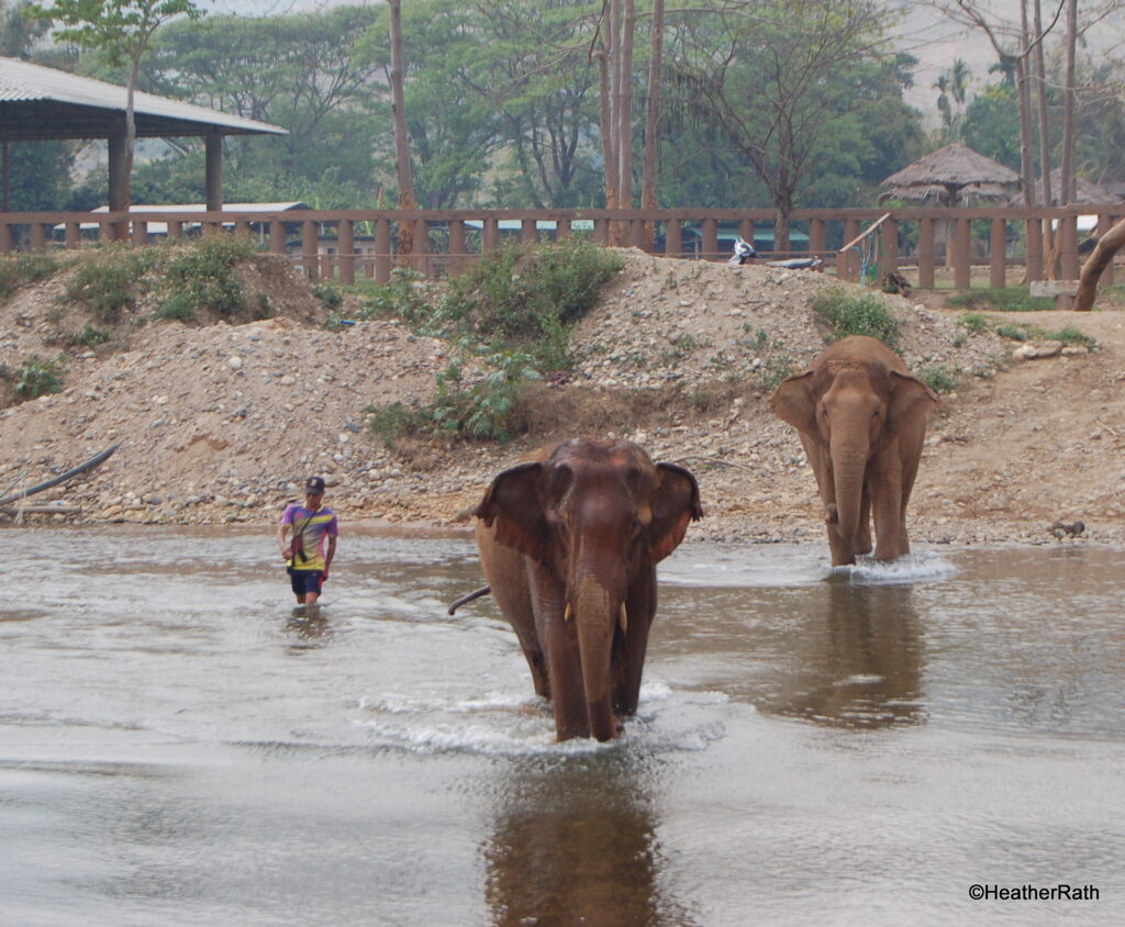 two of the 70 elephants in the park